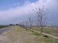 2011.4-9.jpg