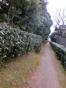 ujiryou26-3300.jpg